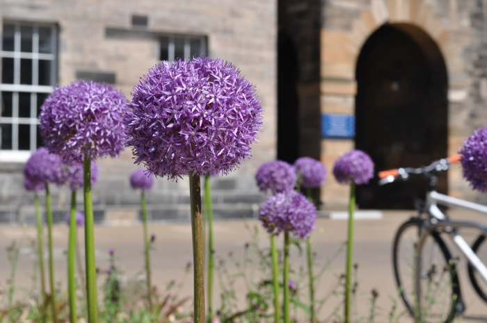 Edinburgh Centre for Carbon Innovation - Landscape Design